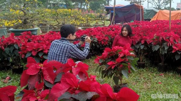 Dòng người đổ về chợ hoa Tết Đà Nẵng chiêm ngưỡng sắc xuân