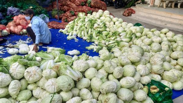 Phân phát 15 tấn rau củ đến người dân thôn Văn Lâm
