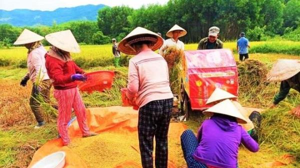 Góc đáng yêu: Vợ chồng đi cách ly, cả làng xúm vào gặt lúa dùm