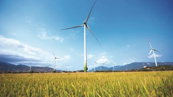 Ninh Thuận: Cờ đến tay điện gió
