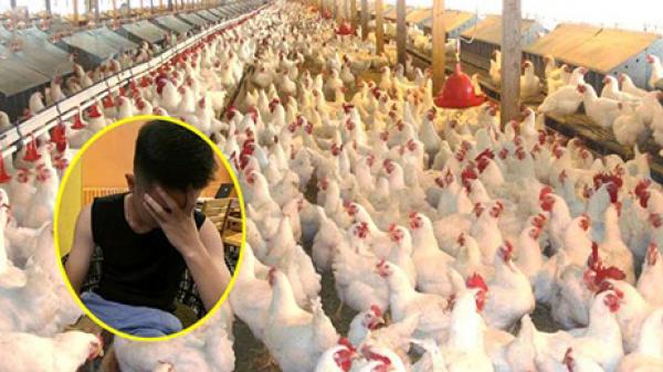Lỡ tay đặt 1000 con gà giá 22.000 VNĐ, thanh niên khổ sở khi nhận hàng