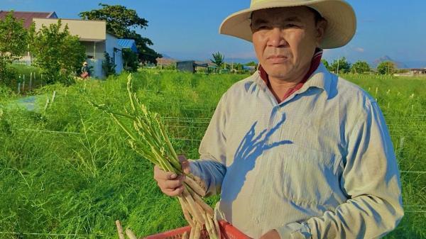 """Ninh Thuận: Nông dân tỷ phú vùng đất """"sa mạc"""" đi lên từ hai bàn tay trắng"""