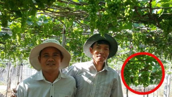 8x Ninh Thuận về quê kiếm hàng trăm triệu chỉ từ 2 sào đất cát