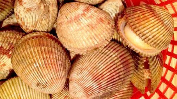 Điều ít người biết về sò dương - đặc sản nổi tiếng đất Ninh Thuận