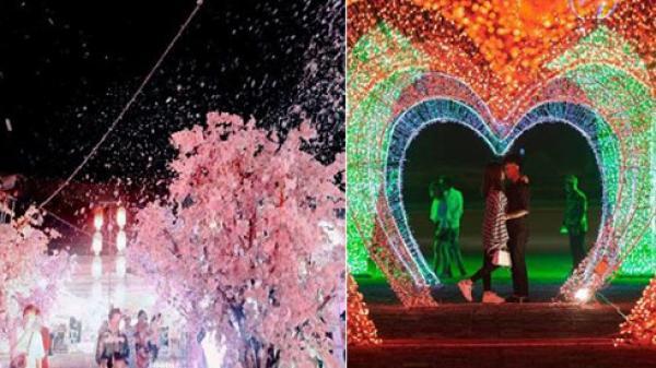 Nam Định tưng bừng chờ đón Lễ hội ánh sáng và hoa anh đào lớn nhất Việt Nam cực hoành tráng, lộng lẫy