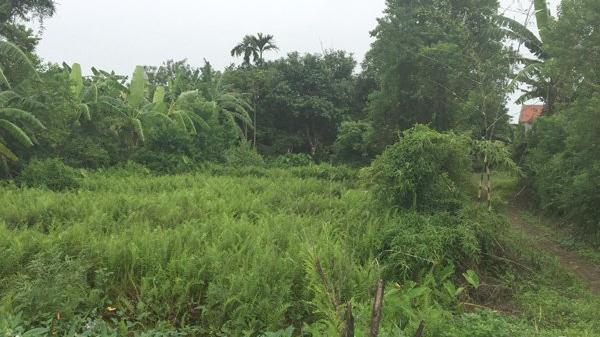 Thái Bình: Gặt lúa giúp hàng xóm, cả chục người lăn ra bất tỉnh