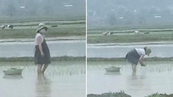 Thai phụ bụng bầu vượt mặt vẫn phải còng lưng cấy lúa: Người thương cảm, người cho biết đó là chuyện thường thấy ở quê