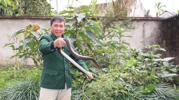 Hạ Hòa, Phú Thọ: Nuôi đàn rắn độc 200 con, mỗi con sinh lời 750.000 đồng/năm