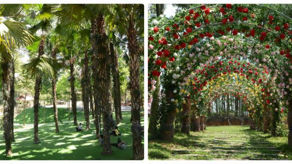 Đến Thu Cúc Garden (Phú Thọ) vào NGÀY KHAI TRƯƠNG để hưởng nhiều KHUYẾN MÃI khủng