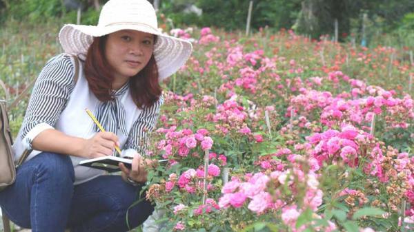 Cô gái quê Phú Thọ âm thầm nghỉ việc, vay tiền trồng 6.000 gốc hồng và thu tiền tỷ mỗi năm
