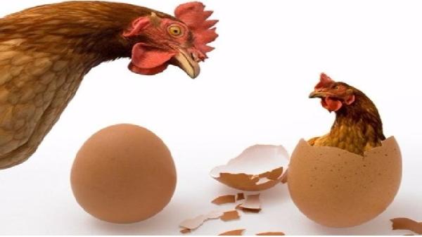 Gặp gà trộm gà, gặp trứng hốt trứng
