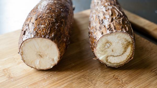 KÌ DIỆU loài cây rẻ như cho ở Việt Nam lại là nguyên liệu tạo nên TÚI THẦN cho nhân loại