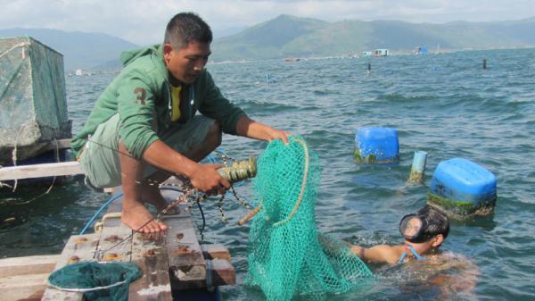 Phú Yên: Tạo mọi điều kiện hỗ trợ thanh niên khởi nghiệp