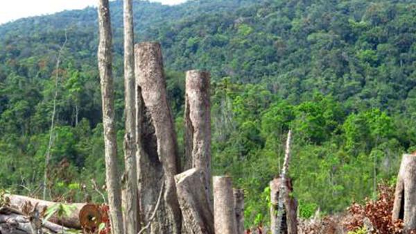 Phá rừng, bốn bị can bị truy tố