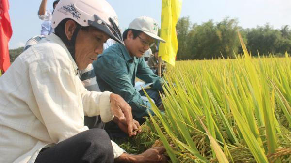 Tuy An (Phú Yên): Tự hào trang sử vẻ vang