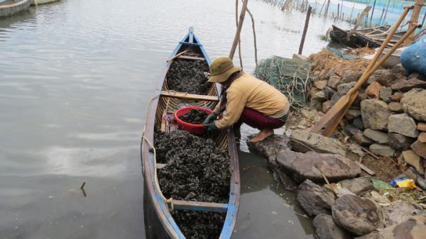 Phú Yên: Đầm Ô Loan đang biến dạng