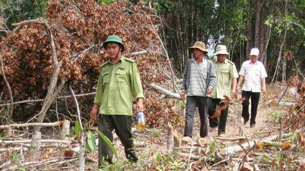 Phú Yên: Phối hợp phòng chống cháy rừng trong mùa khô
