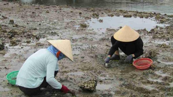 Phú Yên: Gập ghềnh mưu sinh nghề cào sò trên đầm