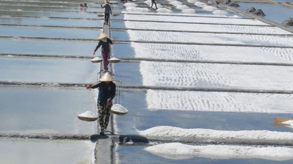 Muối tăng giá, diêm dân Phú Yên phấn khởi