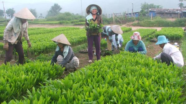 Người Phú Yên trồng rừng