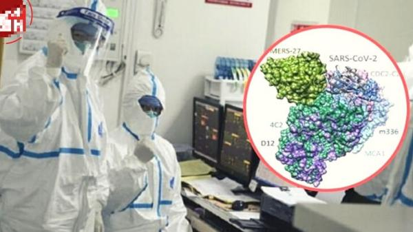 Hàn Quốc: Đã tìm thấy kháng thể vô hiệu hóa virus Corona