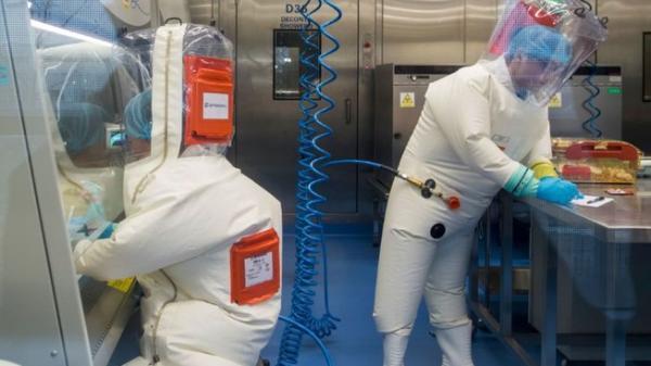 WHO: COVID-19 nguồn gốc từ dơi, không phải từ phòng thí nghiệm