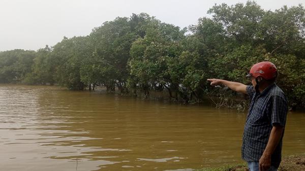 Rừng lộc vừng - báu vật bên dòng Đâu Giang