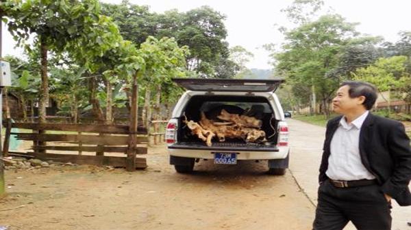 Xe biển số xanh chở gỗ lậu: Nể tình giúp đỡ?