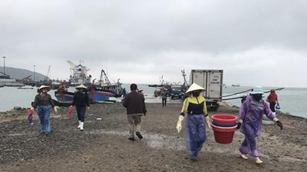 Cảng cá lậu ở Hòn La: Lúng túng xác định cơ quan chịu trách nhiệm