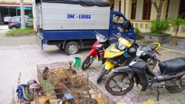 Hà Tĩnh: Bắt giữ nhóm đối tượng sử dụng ô tô đi bắt trộm mèo