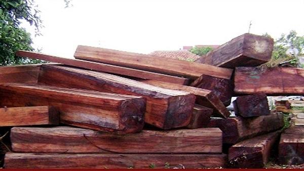 Bắt giữ số lượng gỗ lậu khủng trên xe tải