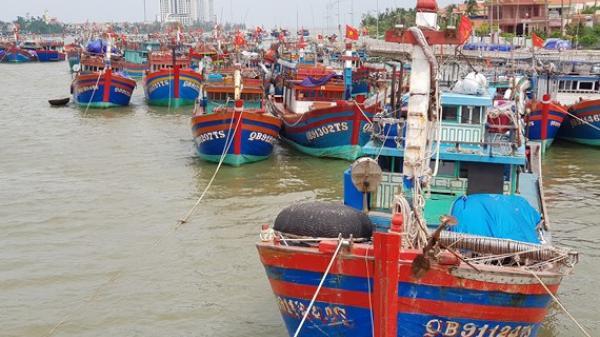 Một xã biển ở Quảng Bình đạt sản lượng kinh tế hơn 800 tỷ đồng