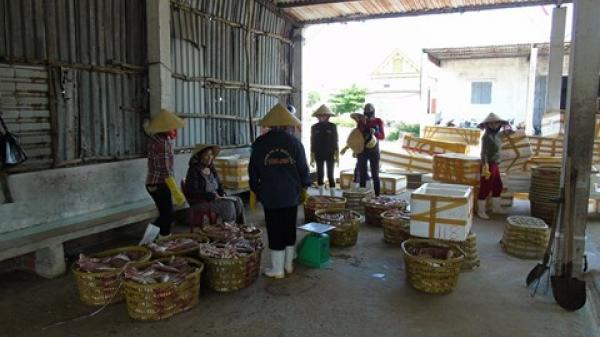 Quảng Bình: Hỗ trợ 13 tỉ cho sinh viên, học sinh bị ảnh hưởng môi trường biển