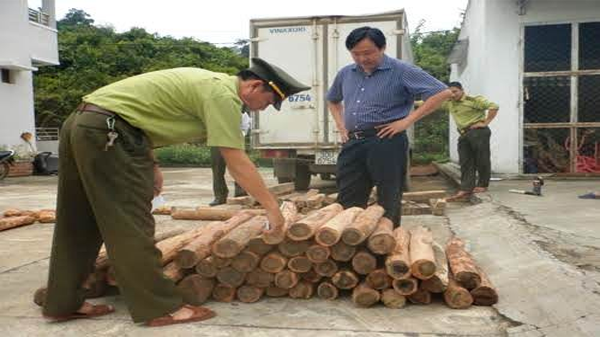 Tạm giữ 100 khúc gỗ Hương giáng trên đường về xuôi tiêu thụ