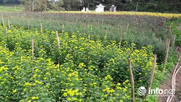 Quảng Bình: Lý Trạch rộn ràng cho mùa hoa Tết