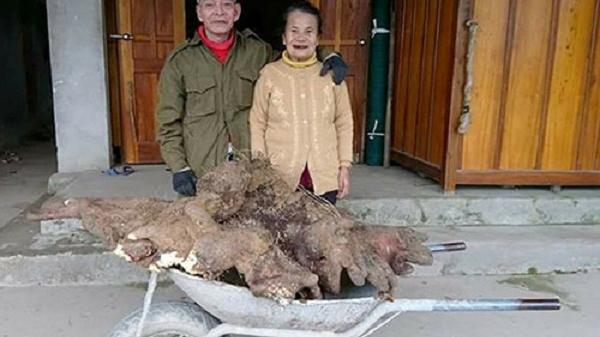 Đào được củ khoai nặng 37kg, trả 15 triệu đồng không bán, cụ ông giữ lại nấu chè đãi cả làng
