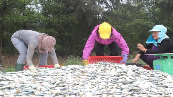 Sự cố môi trường biển miền Trung, 1 năm nhìn lại