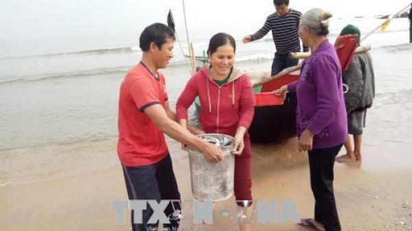 Ngư dân Quảng Bình trúng 'lộc biển' đầu năm