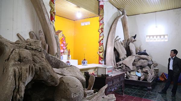 Hai bộ xương cá được thờ phụng ở Quảng Bình