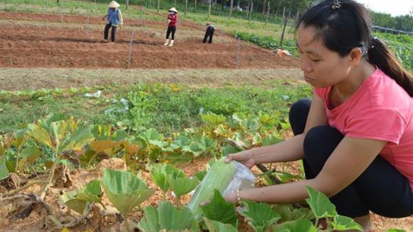 Quảng Bình: Từ chối đi Úc làm tiến sỹ, về quê trồng rau