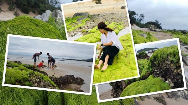 Mê mẩn với vẻ đẹp của bãi đá rong biển ngay tại bờ biển Vũng Chùa – Quảng Bình