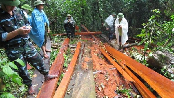 """Quảng Bình: Điều tra vụ khai thác gỗ lậu """"khủng"""" chưa kịp đưa ra khỏi rừng"""