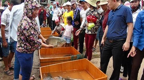 Quảng Bình: Đặc sắc lễ hội thi cá trắm trên sông Son