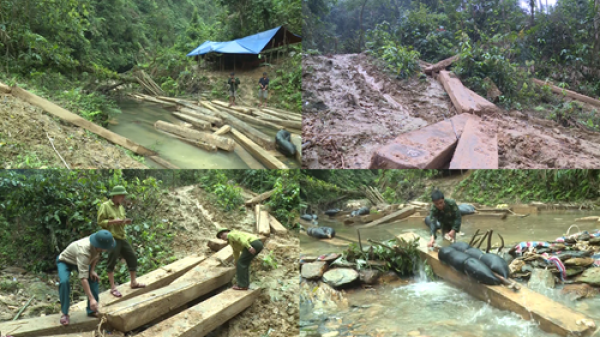 Khởi tố vụ án phá rừng lớn nhất từ trước đến nay ở Quảng Bình