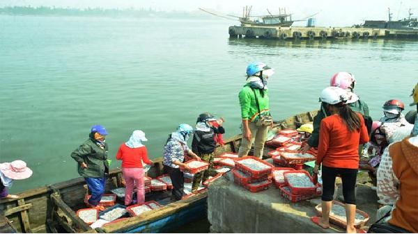 Chi trả bồi thường thiệt hại sự cố môi trường biển miền Trung: Kịp thời, công bằng, đúng đối tượng