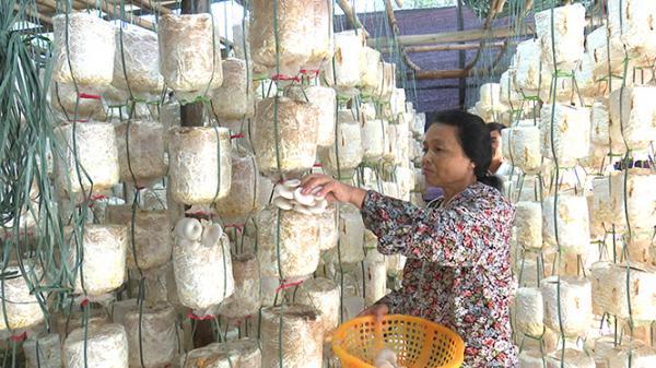 Quảng Bình: Trồng nấm lãi gần 200 triệu đồng/năm