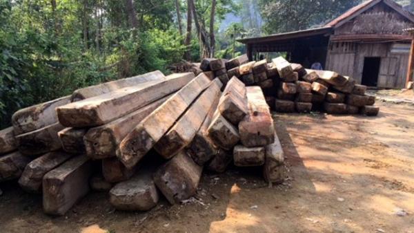 Quảng Bình: Cách chức trạm trưởng kiểm lâm vụ phá rừng quy mô lớn