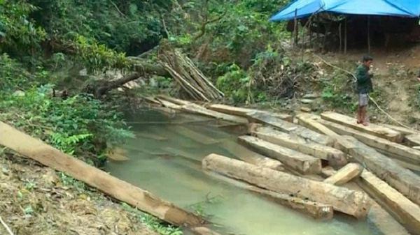 """Để rừng """"chảy máu"""", Phó Chủ tịch huyện Tuyên Hóa bị kỷ luật"""
