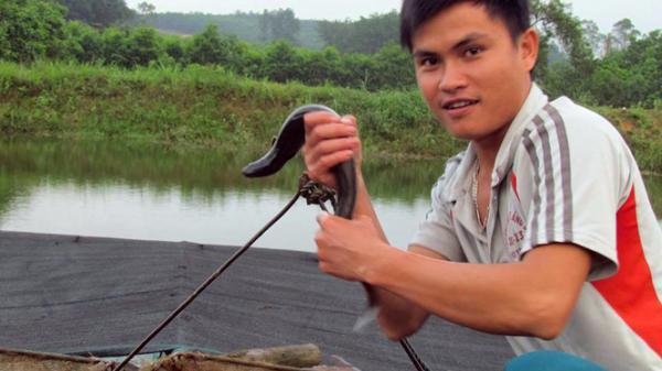 Thành công bất ngờ từ khởi nghiệp nuôi cá chình của chàng trai Quảng Bình
