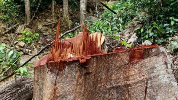 Quảng Bình: Phát hiện hàng chục khối gỗ lậu giữa rừng biên giới